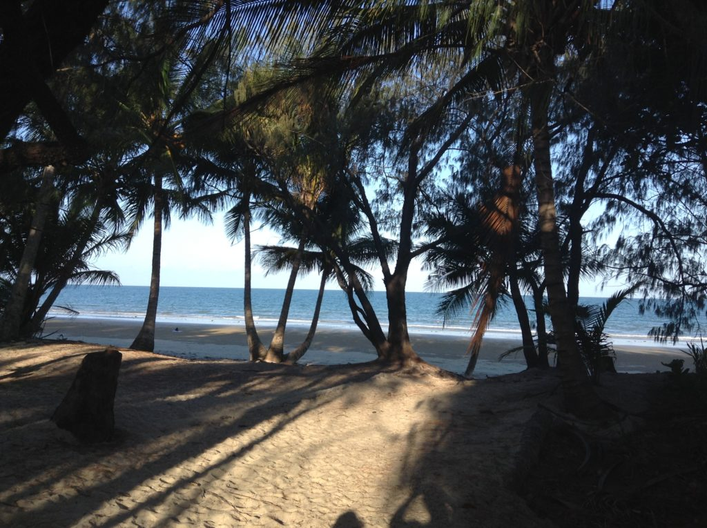 cocotiers, sable fin, plage